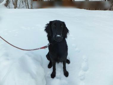 f:id:dog_life_saving:20140125224112j:image
