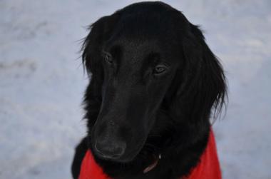 f:id:dog_life_saving:20140125224113j:image