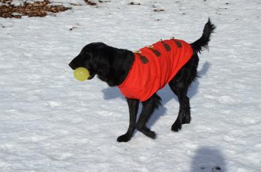 f:id:dog_life_saving:20140125224114j:image