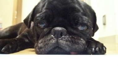 f:id:dog_life_saving:20140216200104j:image