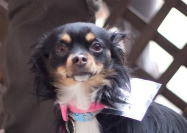 f:id:dog_life_saving:20140216201624j:image