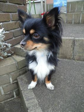 f:id:dog_life_saving:20140216201625j:image