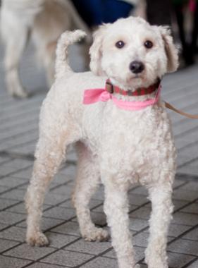 f:id:dog_life_saving:20140216213457j:image