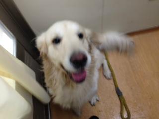 f:id:dog_life_saving:20140216220040j:image