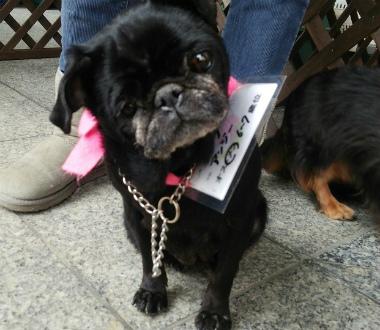 f:id:dog_life_saving:20140218210839j:image