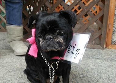 f:id:dog_life_saving:20140218210840j:image