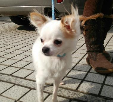 f:id:dog_life_saving:20140218212033j:image