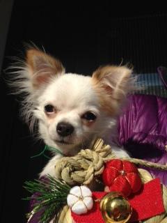 f:id:dog_life_saving:20140218212034j:image