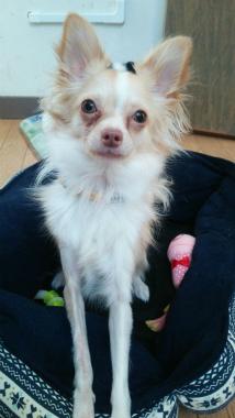 f:id:dog_life_saving:20140218220522j:image