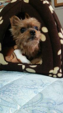 f:id:dog_life_saving:20140327211030j:image