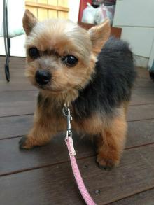 f:id:dog_life_saving:20140327211031j:image