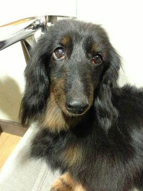 f:id:dog_life_saving:20140327214839j:image