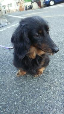 f:id:dog_life_saving:20140327214841j:image