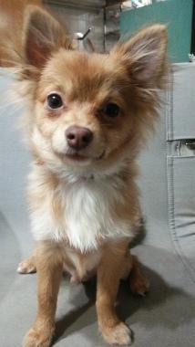 f:id:dog_life_saving:20140329173424j:image