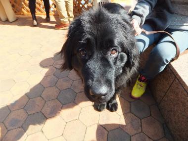 f:id:dog_life_saving:20140330193310j:image