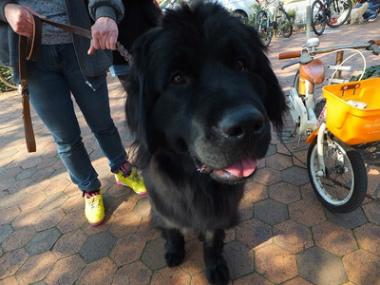 f:id:dog_life_saving:20140330193311j:image