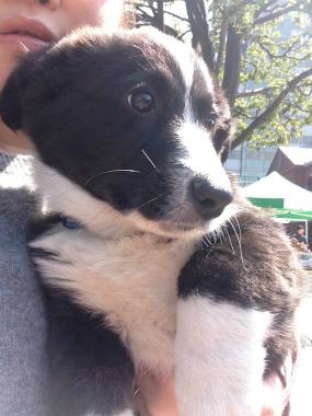 f:id:dog_life_saving:20140413205802j:image