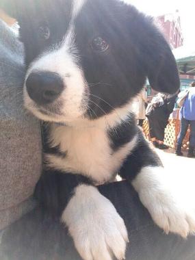 f:id:dog_life_saving:20140413205804j:image