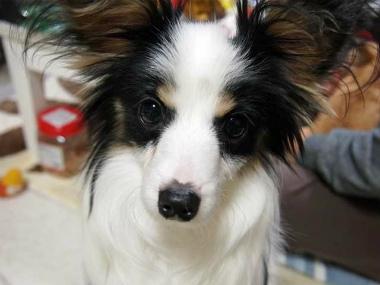 f:id:dog_life_saving:20140508210550j:image