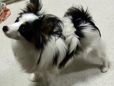 f:id:dog_life_saving:20140508210553j:image