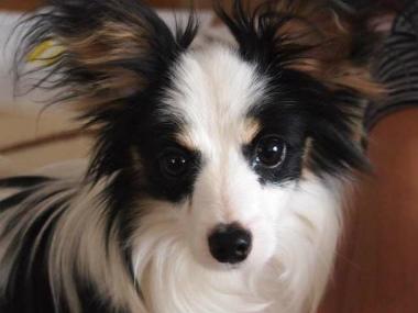 f:id:dog_life_saving:20140508210554j:image