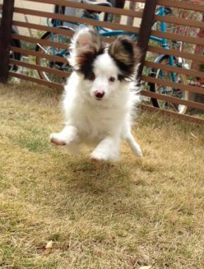 f:id:dog_life_saving:20140508211359j:image