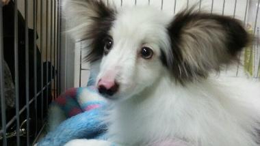f:id:dog_life_saving:20140508211400j:image