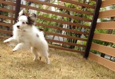 f:id:dog_life_saving:20140508211401j:image