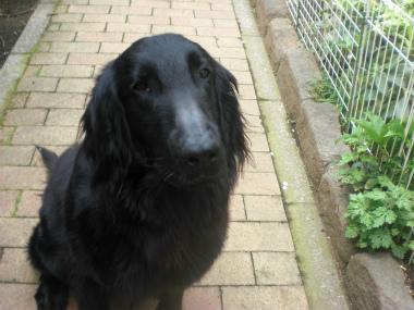 f:id:dog_life_saving:20140508215203j:image