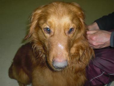 f:id:dog_life_saving:20140508220404j:image