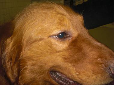 f:id:dog_life_saving:20140508220406j:image