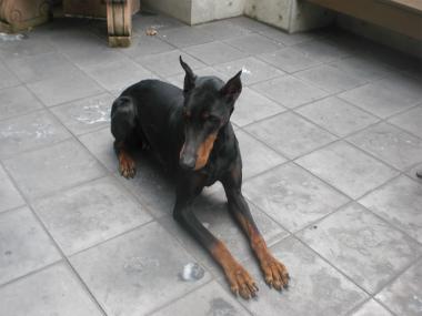 f:id:dog_life_saving:20140518220903j:image