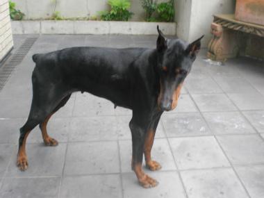 f:id:dog_life_saving:20140518220905j:image