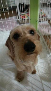 f:id:dog_life_saving:20140521215019j:image