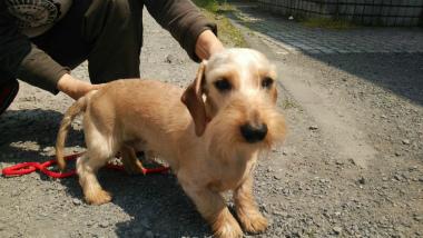 f:id:dog_life_saving:20140521215020j:image