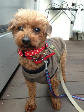 f:id:dog_life_saving:20140521222551j:image