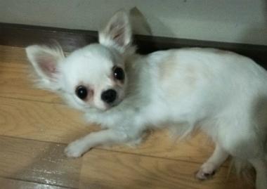 f:id:dog_life_saving:20140523221737j:image