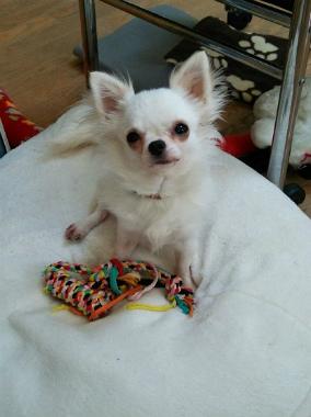 f:id:dog_life_saving:20140523221738j:image