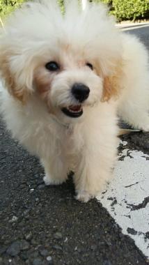 f:id:dog_life_saving:20140605185211j:image