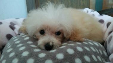 f:id:dog_life_saving:20140605185212j:image