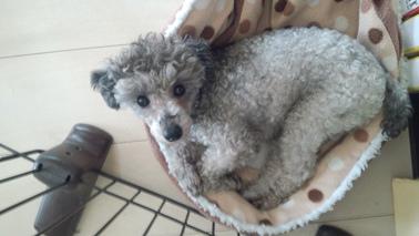 f:id:dog_life_saving:20140611215409j:image