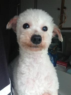 f:id:dog_life_saving:20140611220045j:image