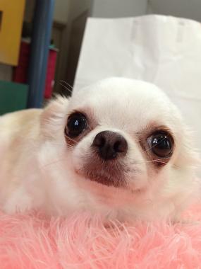 f:id:dog_life_saving:20140615065344j:image