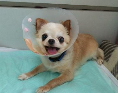 f:id:dog_life_saving:20140615070233j:image