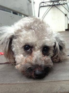 f:id:dog_life_saving:20140615080200j:image
