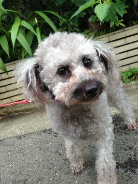 f:id:dog_life_saving:20140615080202j:image