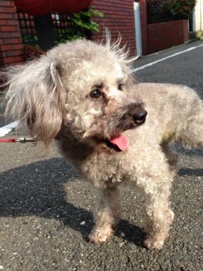f:id:dog_life_saving:20140615080204j:image