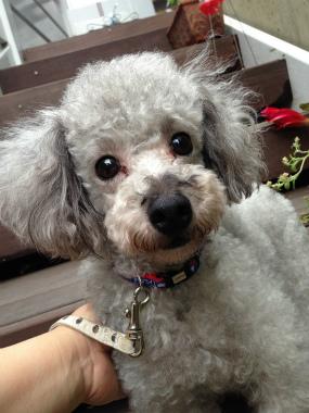 f:id:dog_life_saving:20140615081034j:image