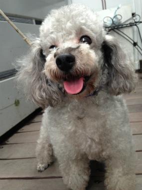 f:id:dog_life_saving:20140615081036j:image