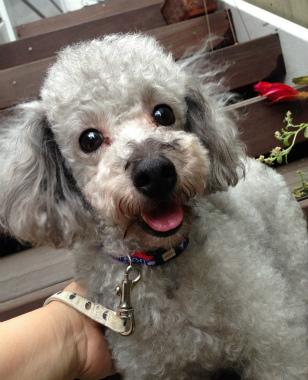 f:id:dog_life_saving:20140615081038j:image